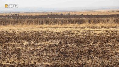 Photo of Burning crop residue affects soil, livestock, and electricity in Syria's Derik