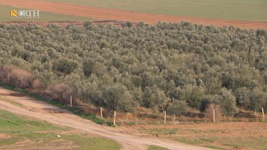 Photo of Farmers tend to plant trees in Syria's Hasakah