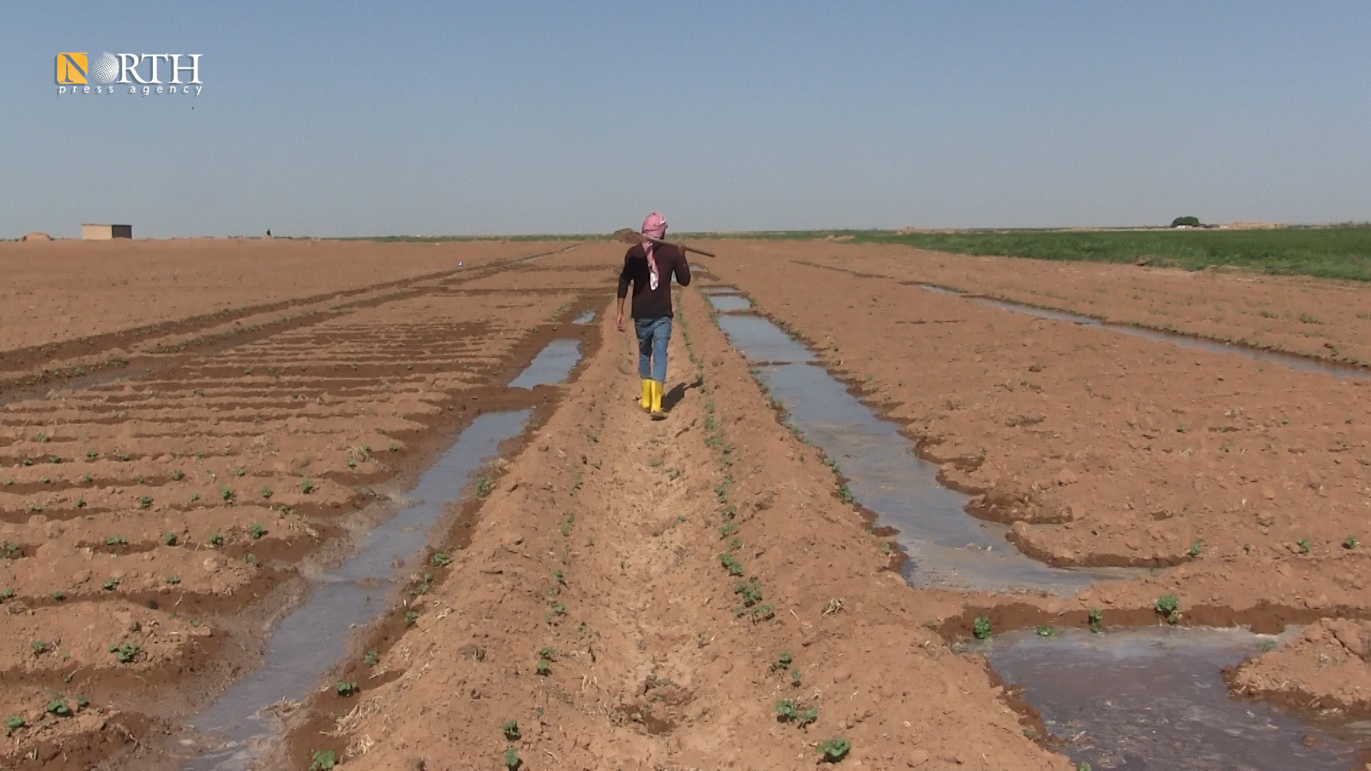 A farmer watering his lands with artesian well in the city of Raqqa – North Press