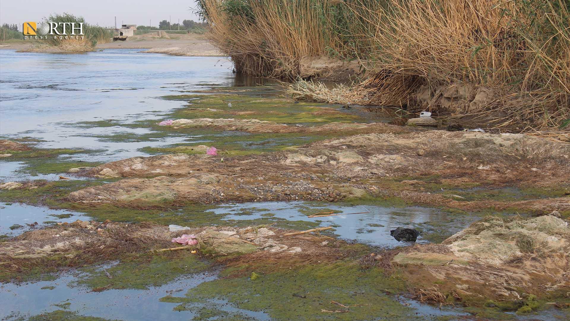 River algae have become outside the course of the Euphrates River near Raqqa - North Press