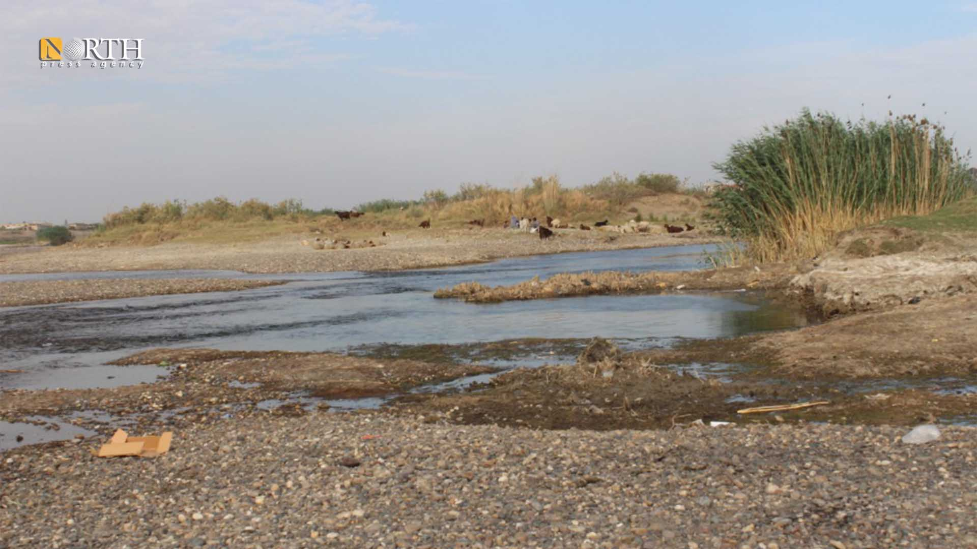 The Euphrates River has turned into small streams during its passage near Raqqa – North Press