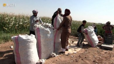 Photo of On World Cotton Day, what about Syrian farmers?