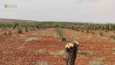 Photo of Turkish-backed factions impose royalties on Syria's Afrin farmers