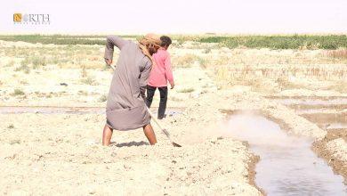 Photo of Syria's Deir ez-Zor farmers fear planting winter crops after last season's losses