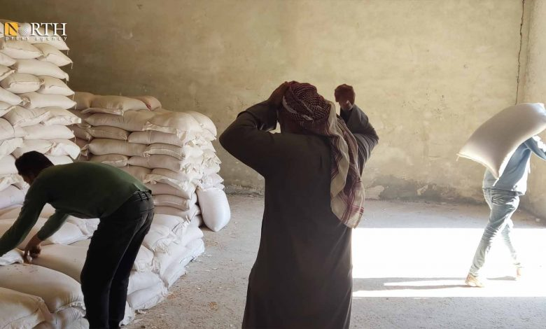 Photo of Wheat seed distribution started in Syria's Manbij